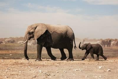 例えば1トンのものって何?車の重さや象の体重は?
