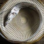 太刀魚の寄生虫アニサキスは塩焼きにすれば大丈夫!刺身で食べる方法も紹介