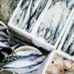 イナダはブリの子?出世魚の順番とおいしい食べ方・捌き方などまるっと紹介