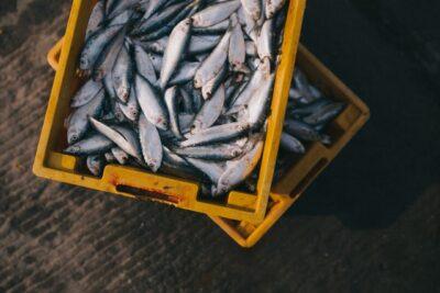 イナダは出世魚・順番と大きさ