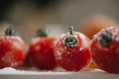 トマトの白カビ・黒カビの原因は