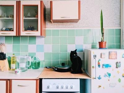 キッシュの保存は冷蔵と冷凍、どちらがいいの?